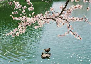 春分の日.jpg