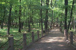 自然公園の日.jpg